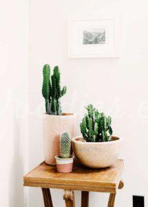 Decoración con cactus combinando varios ejemplares | Woodies