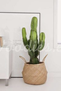 Decoración con cactus para rincones | Woodies