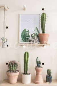 Decoración con cactus en pared| Woodies