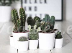 Decoración con cactus, ¡todo por el green!