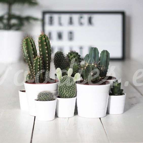 Decoraci n con cactus blog de woodies for Cactus decoracion
