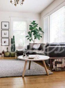 Decoración con cactus, ideal para el hogar | Woodies