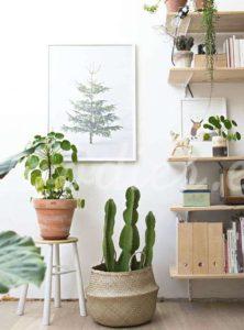 Decoración con cactus en tu hogar| Woodies