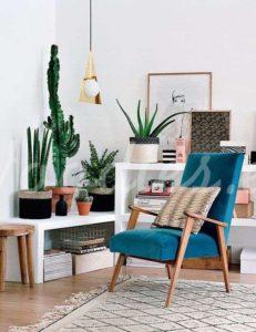 Decoración con cactus: combinación de plantas| Woodies