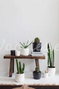 Decoración con cactus en el recibidor de tu casa| Woodies