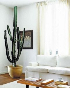Decoración con plantas de interior