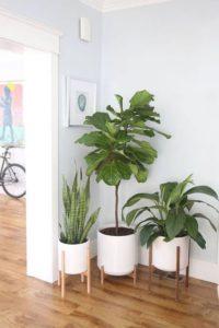 Cómo aprovechar rincones sin uso plantas
